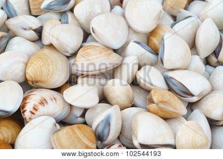 Clams on market display