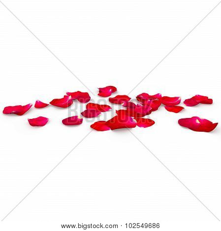 Petals Of A Red Rose Lying On The Floor
