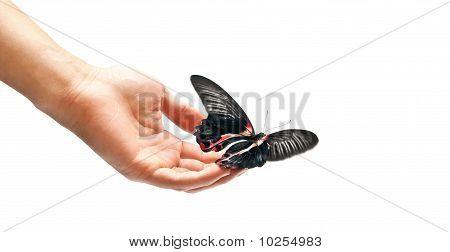 Butterfly In Motion