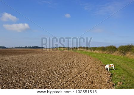 Country Bridleway With Pet Dog