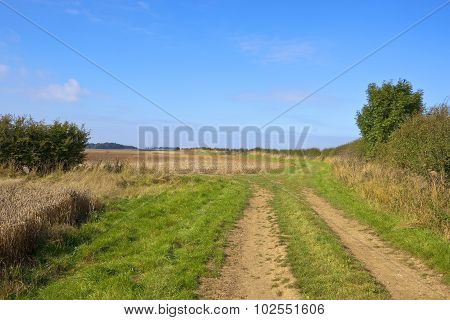 Picturesque Bridleway
