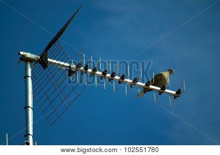 antenna and dove