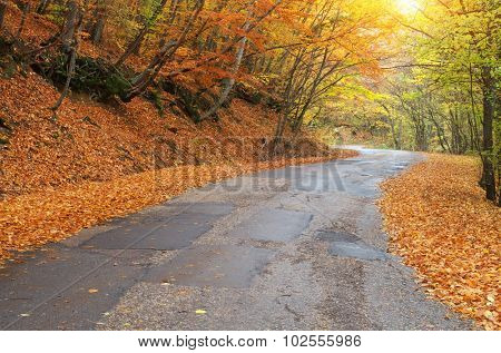Road in autumn wood. Nature landscape composition.