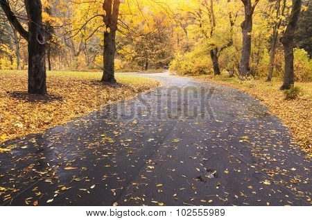 Autumn landscape. Composition of nature. Path in park.