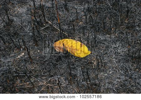 One Yellow Leaf Survived After A Forest Fire. Not Like Everyone Else.they Stand Out From The Crowd.