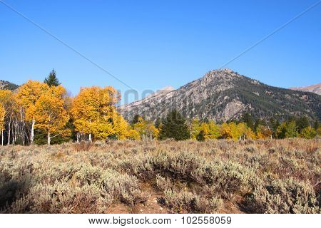 Scenic landscape in Grand Tetons national park