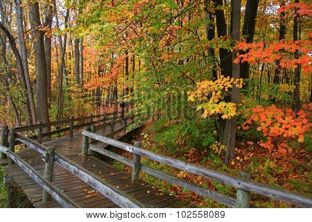 Colorful autumn trees by the board walk