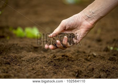 Woman Holding A Handful Of Rich Fertile Soil