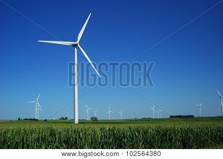 Large Wind Farm in a Corn Field