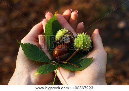 Autumn In Girl's Hands