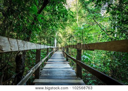 Wooden path in Amazon forest