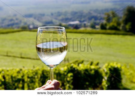 Glass Of White Wine With A Vineyard In The Background