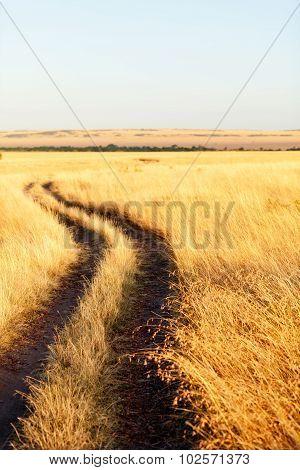 Savanna, Masai Mara