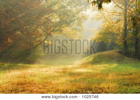 Foggy Rural Scene