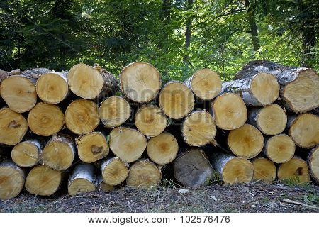 Stack of felled trees in the forest