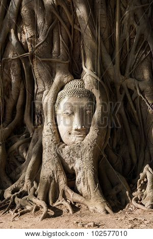Head Of Sand Stone Buddha In Ayutthaya