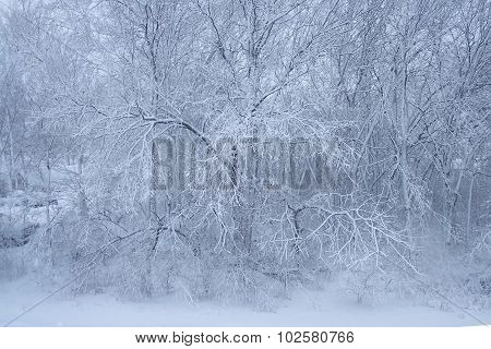 Blue Snow Ice Tree Wonderland