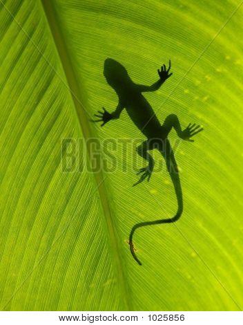 Gecko Silouette