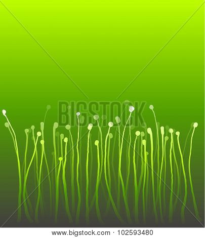 Abstract Nature Curly Gradient Grass Over Green