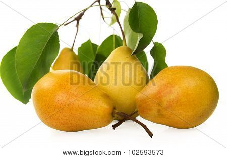 pears-juicy And Fragrant Crop Of 2015.