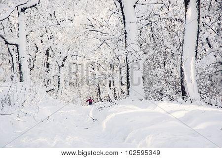 Snowy Footpath In Beautiful Winter Forest