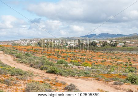 View Of Garies With Wild Flowers In Front