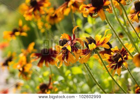 Beautiful flowers in sunny summer day