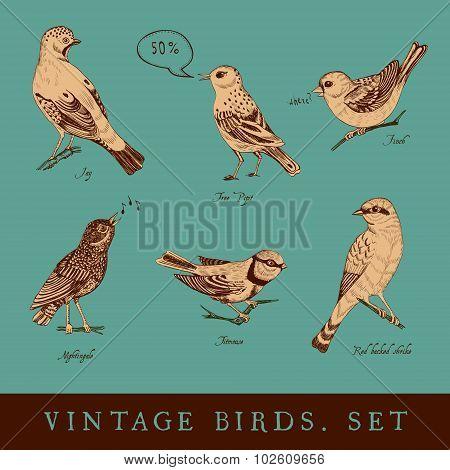 Set of vintage bird on the emerald background