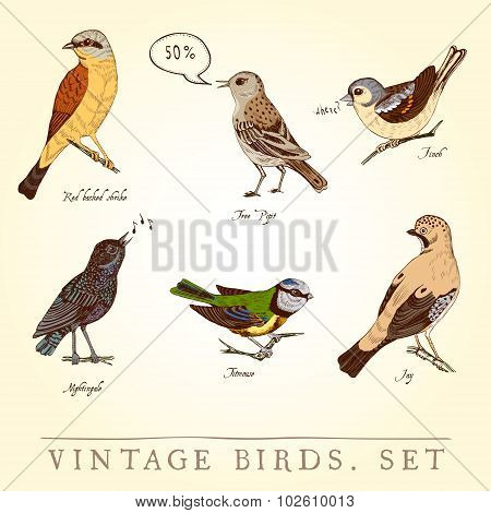 Set of vintage colored birds. Vector illustration.