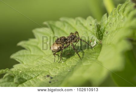 Spider on a leaf in the summertime