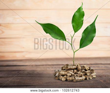 Biomass pellets.