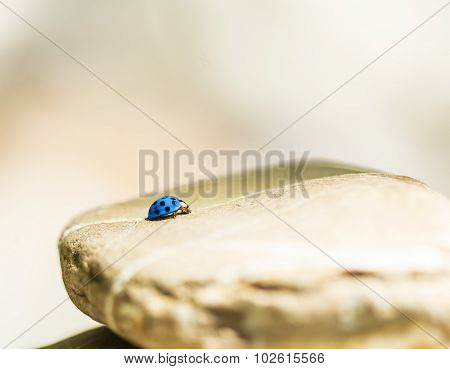 Blue Lady Bug