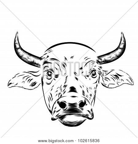 Black and white sketch of a asian cow's face. Vector portrait.