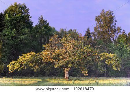 Strange Form Of Oak