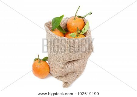 The Mandarins In The Sack
