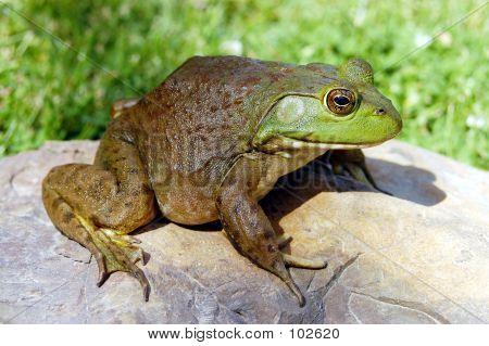 Bullfrog 3