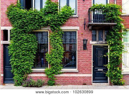 Modern Building Covered With Green Ivy. Netherlands. Western Europe