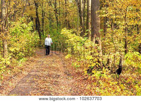 Walking Through Autumn Forest