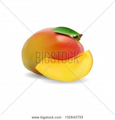 Mango. Realistic Vector Illustration.