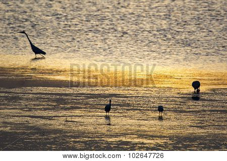Water Birds In A Waterhole As The Sun Rises.