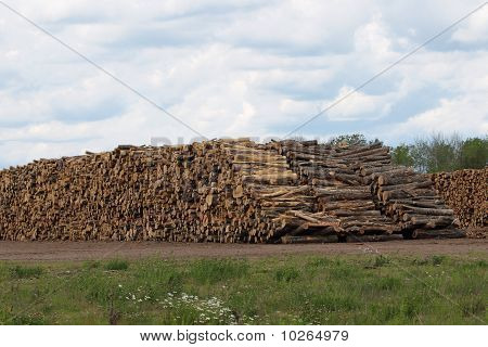 Huge Stacks Of Logs At Sawmill