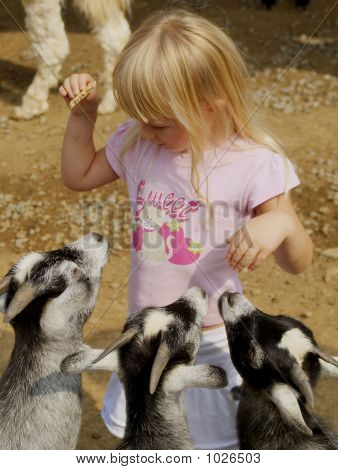 Little Girl Feeding Goats