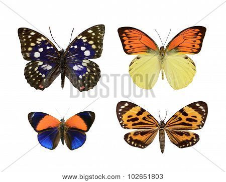 Set Butterfly.