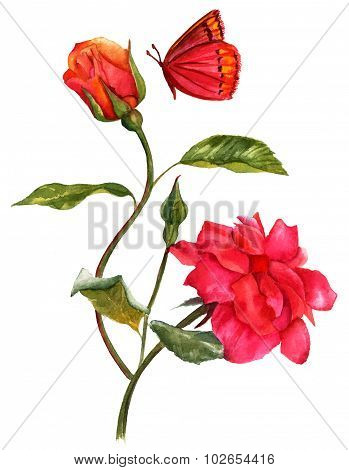 A vintage style watercolour drawing of a bright red rose and an opening bud with a butterfly