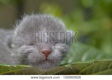 Kitten on a leaf
