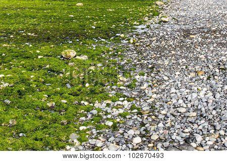 Beach Rocks Fluorescent Seaweed