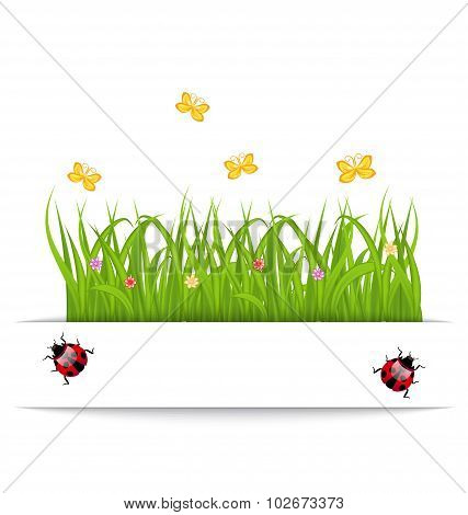 Spring card with grass, flower, butterfly, ladybug
