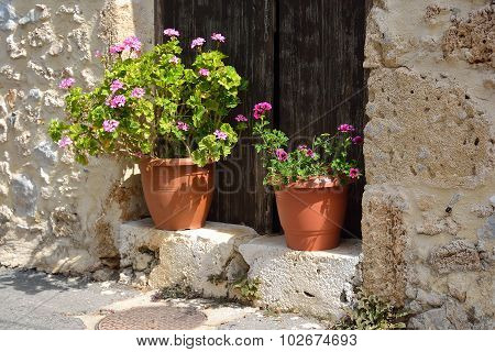 Flowers In Pots.