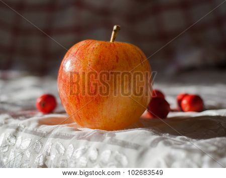 apple and hawthorn