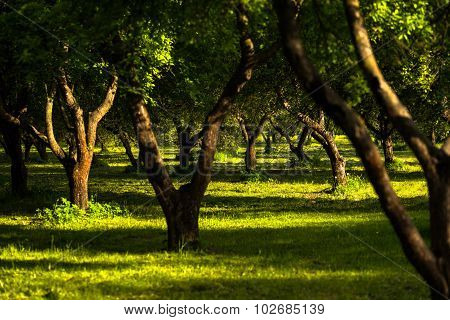 Afternoon park with green grass and sun light through leaves